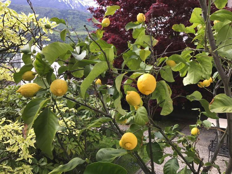 Vacanza a silandro val venosta pensione claudia con - Il sole nel giardino ...