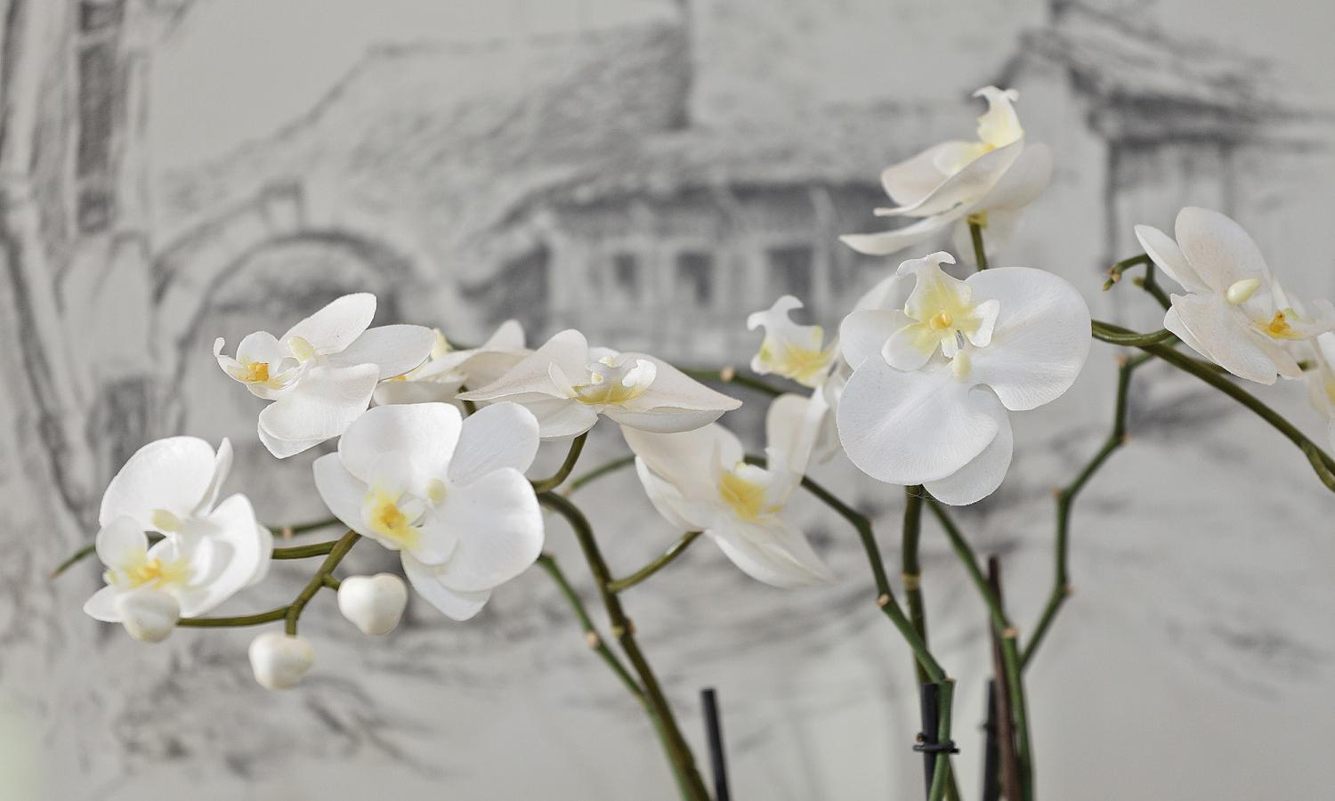 Orchidee bianche - Pensione Claudia